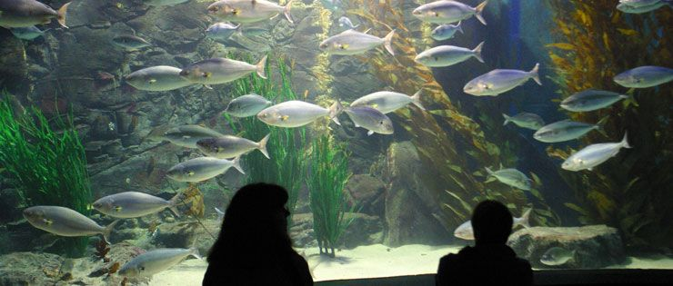 Zoos, Aquariums, and Museums